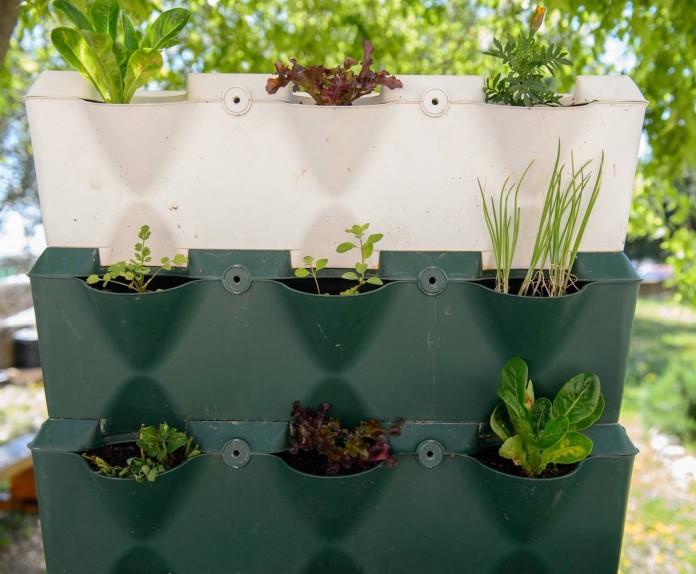 jadin vertical con plantas aromáticas