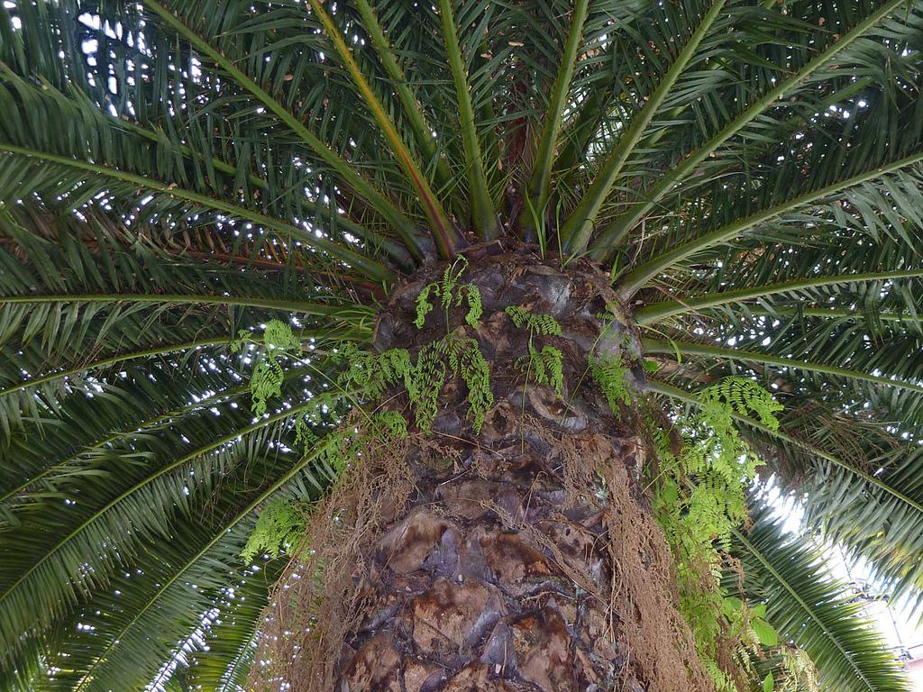 Palmeras en tu jard n logra un estilo diferente - La casa de las palmeras ...