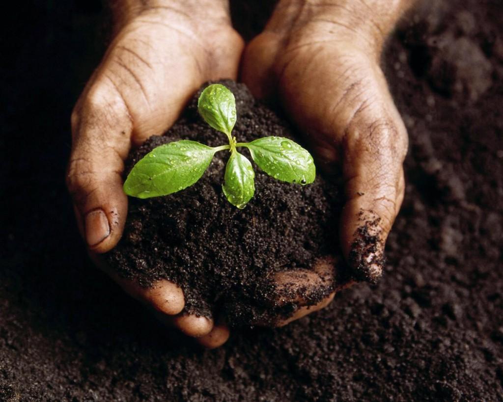 plantas fáciles de cultivar