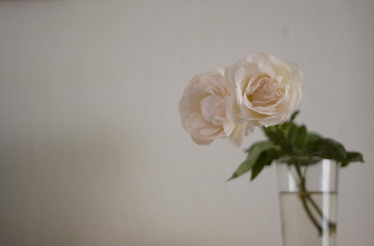 trucos caseros para mantener las flores cortadas