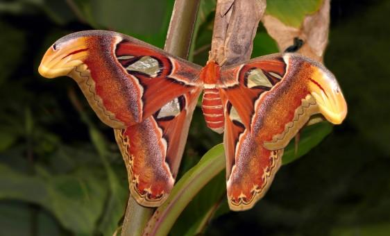 Atraer mariposas al jardín