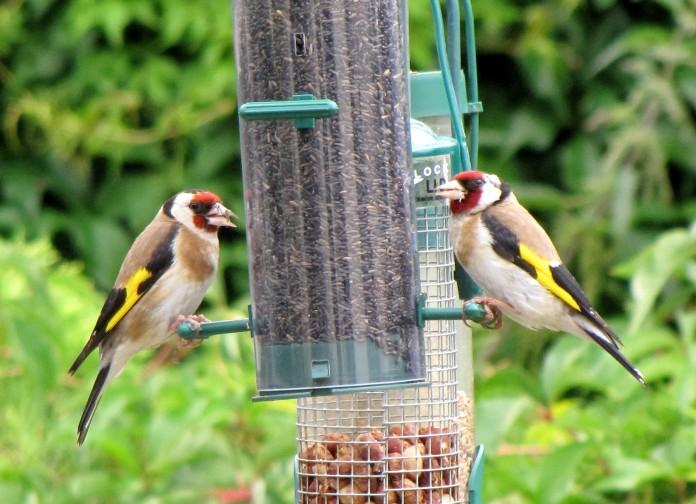 Atraer pájaros al jardín de casa