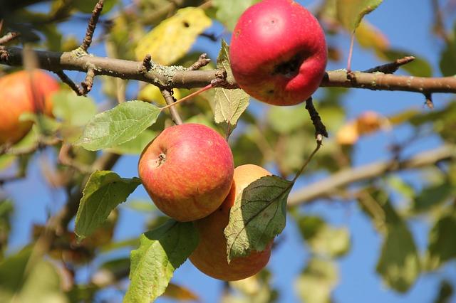 Plantar árboles frutales en invierno