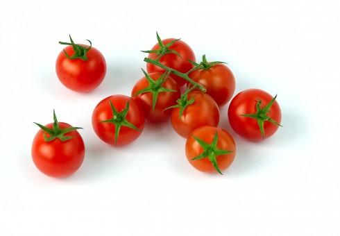 Semillas del tomate