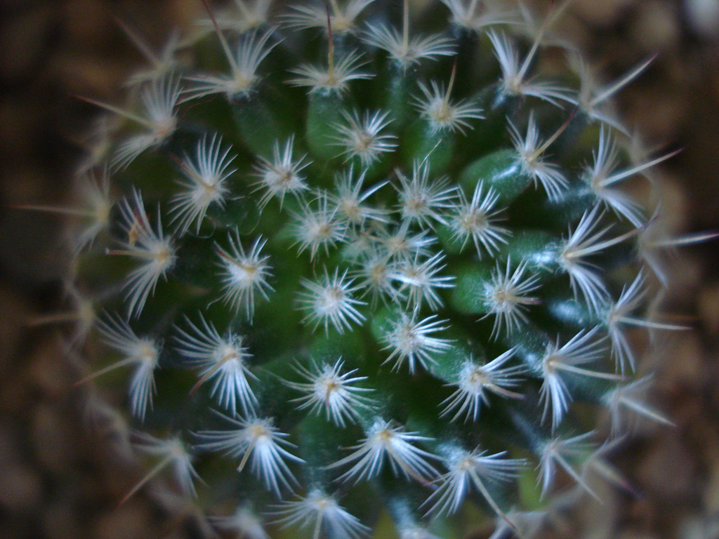 Centro de mesa con cactus