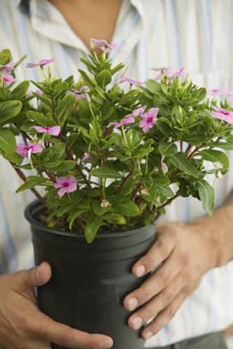 5 ideas para decorar las macetas para regalar en navidad for Fotos de plantas en macetas