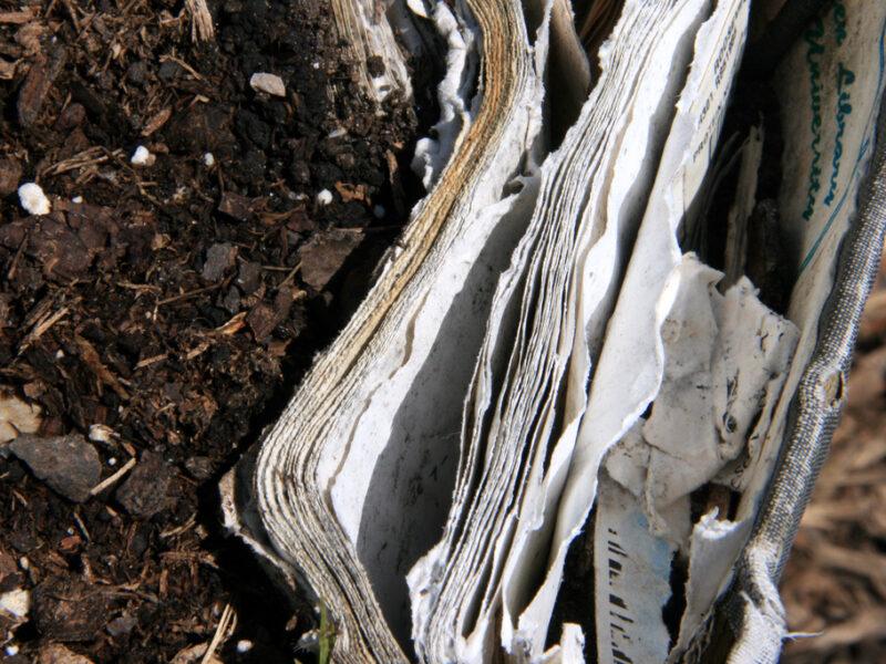 maceta biodegradable