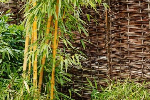 Cuidados del bambú