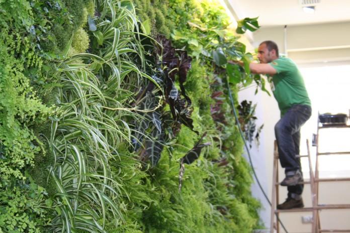 Jardines verticales de interior 1