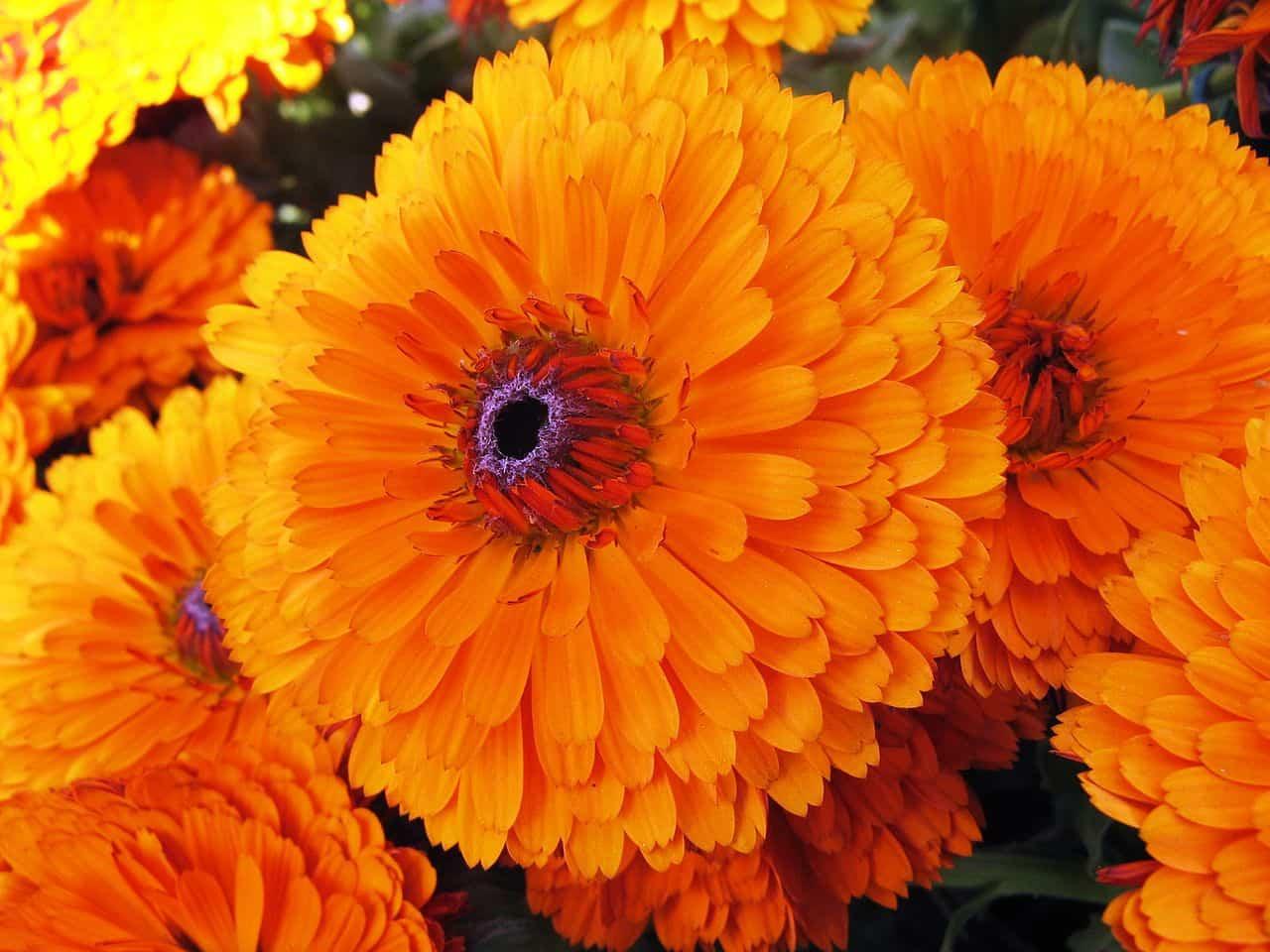 Plantas con flor de invierno