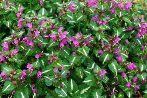 Plantas de florecimiento invernal