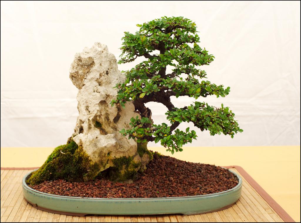 Arte del bonsái