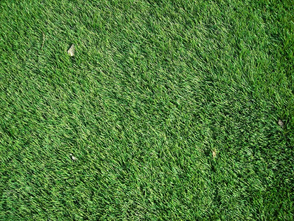 C sped sint tico sus ventajas - Como plantar cesped natural ...