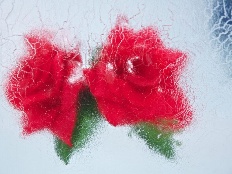 flor helada