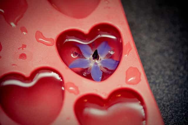 flor en cubitera