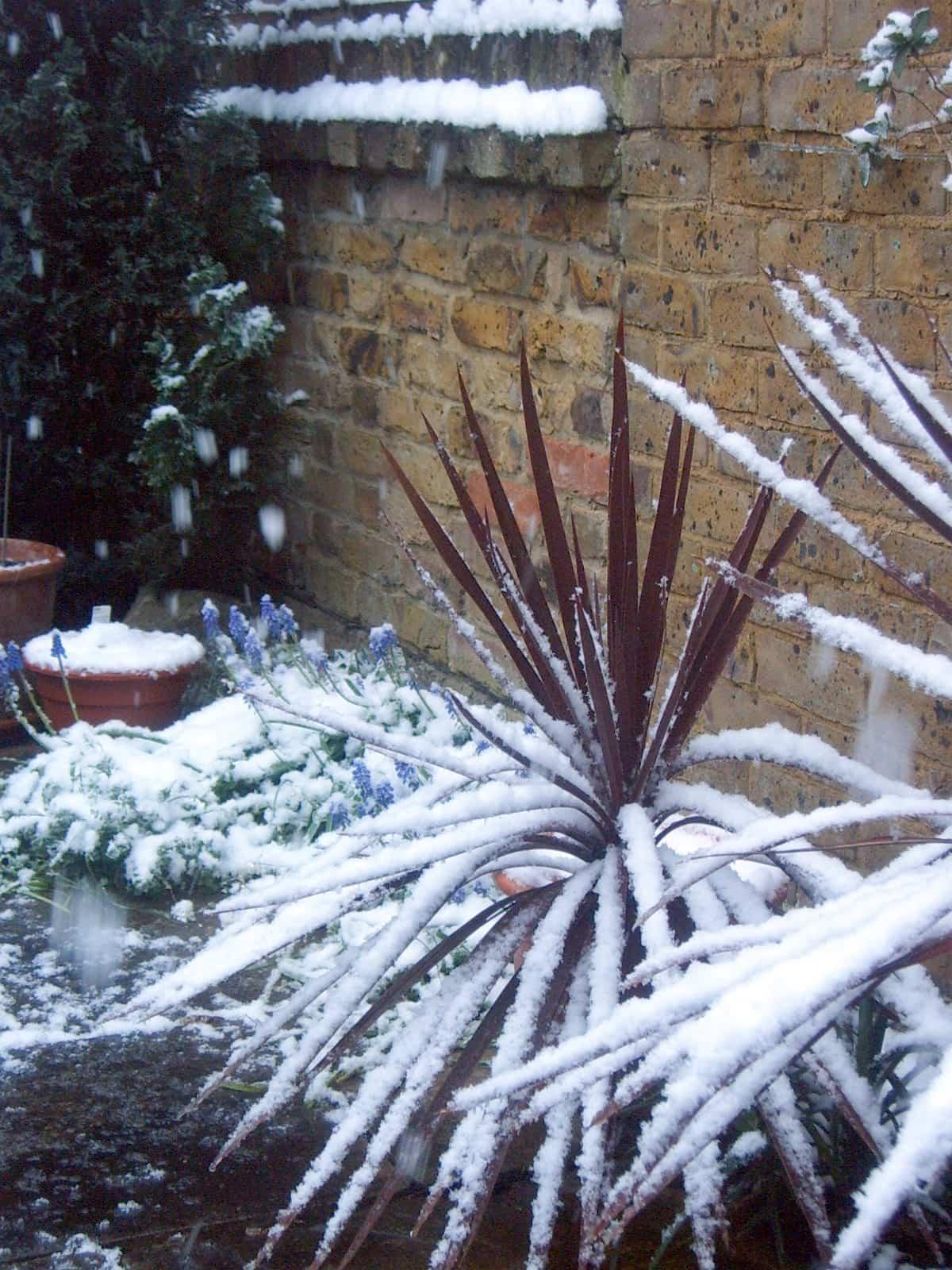Plantas para invierno ¡Heladas y nieve!