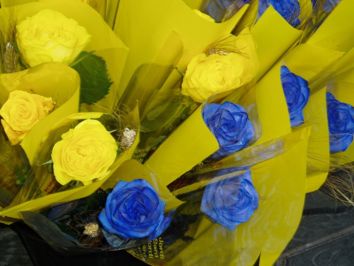 rosas azules y amarillas