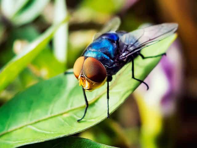 Trampas caseras - Trampa casera para moscas ...