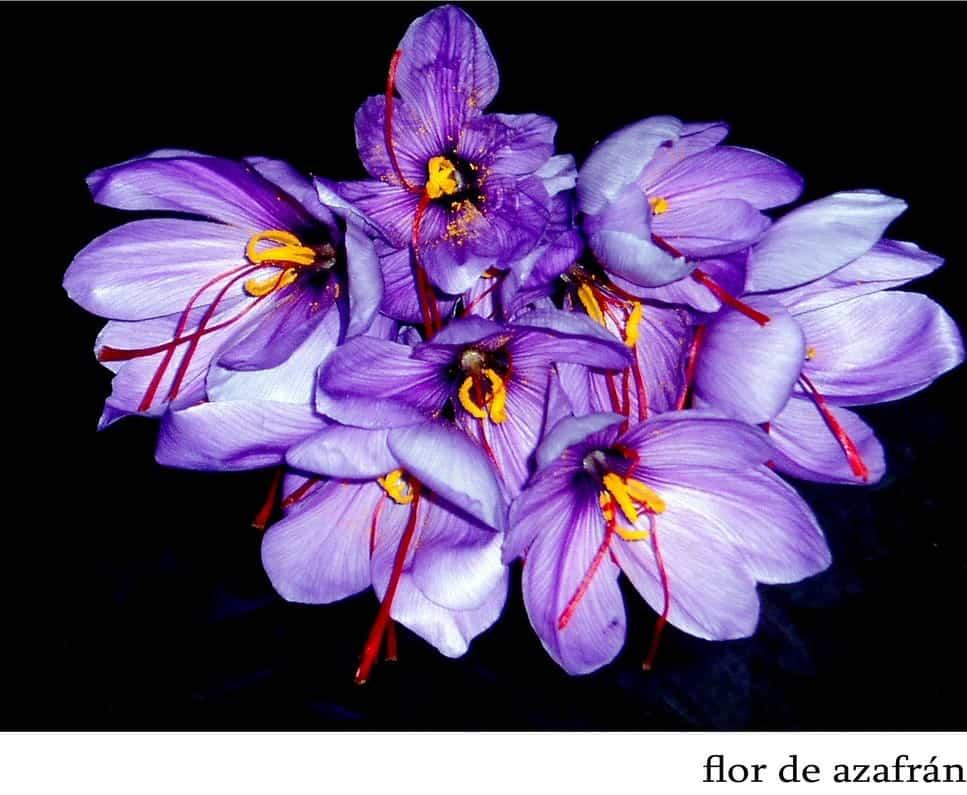 flor azafran