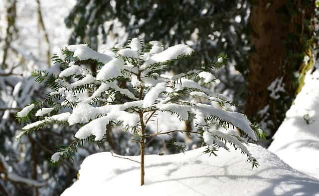 proteger-plantas-nieve