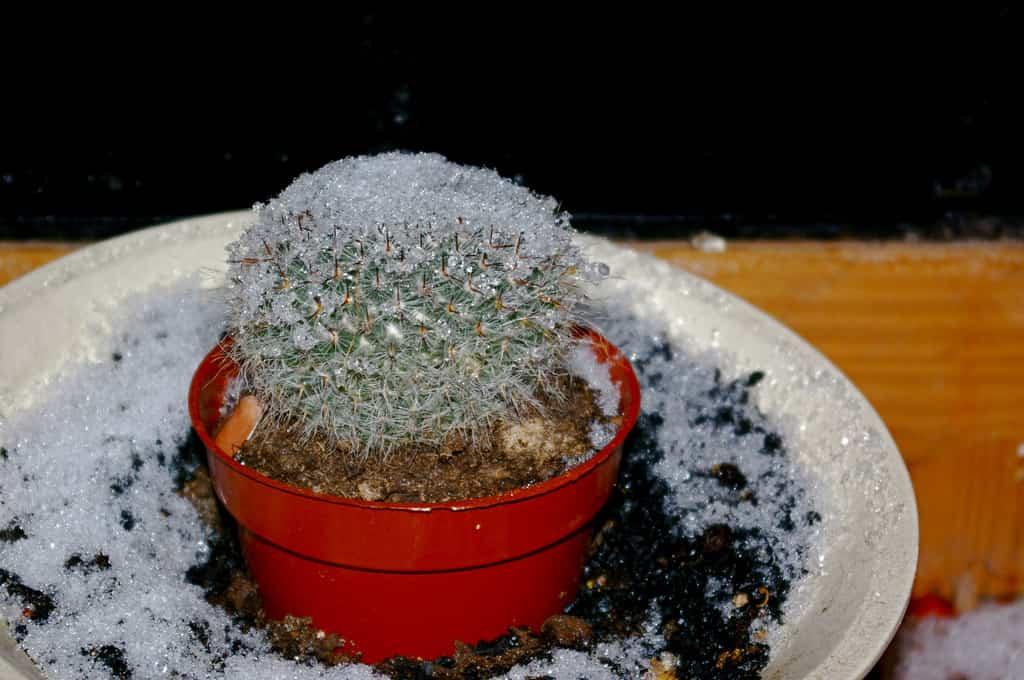 Revivir una planta después de una helada