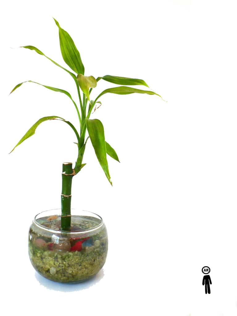 Cómo cuidar los tallos de bambú