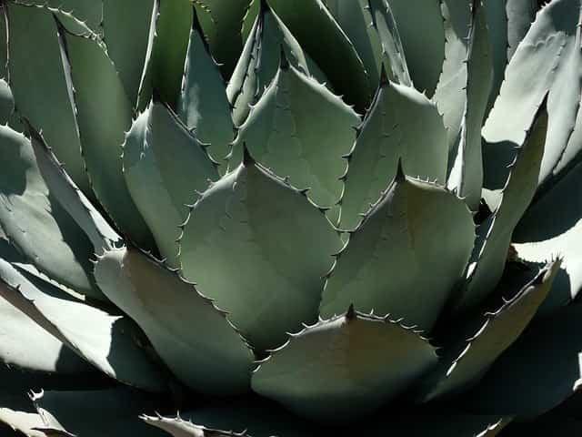 Cuidados de los cactus en el verano 1