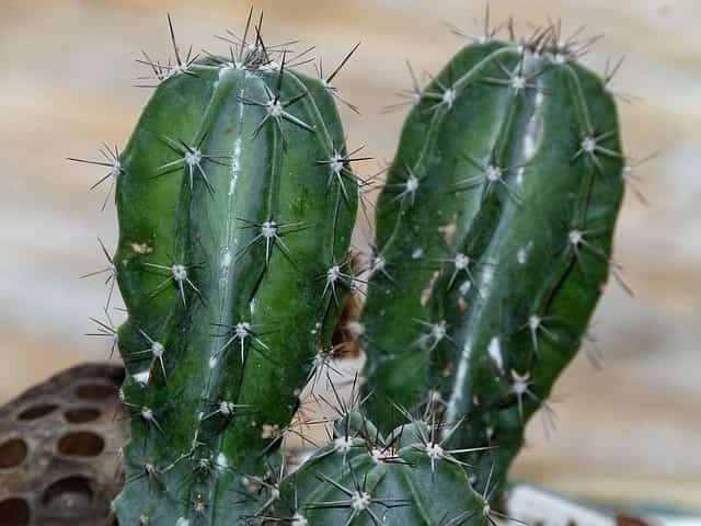 Cuidados de los cactus en el verano 2