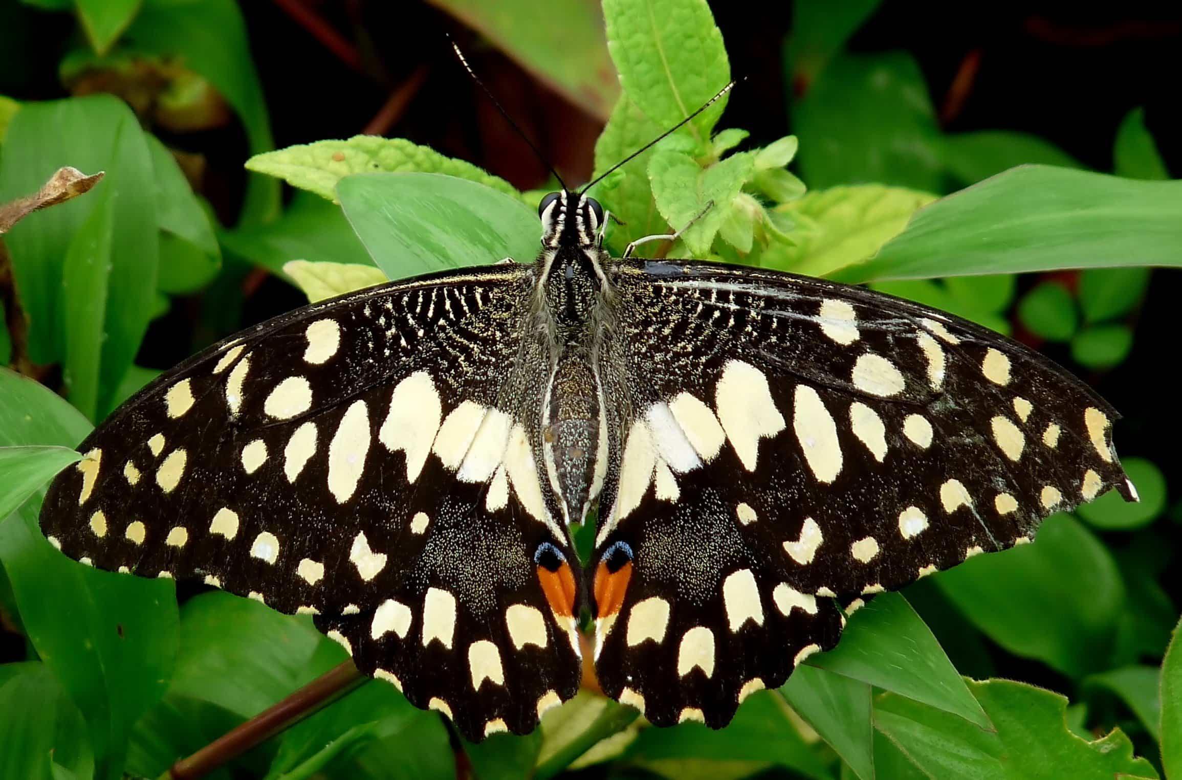 Flores y plantas para atraer mariposas 1