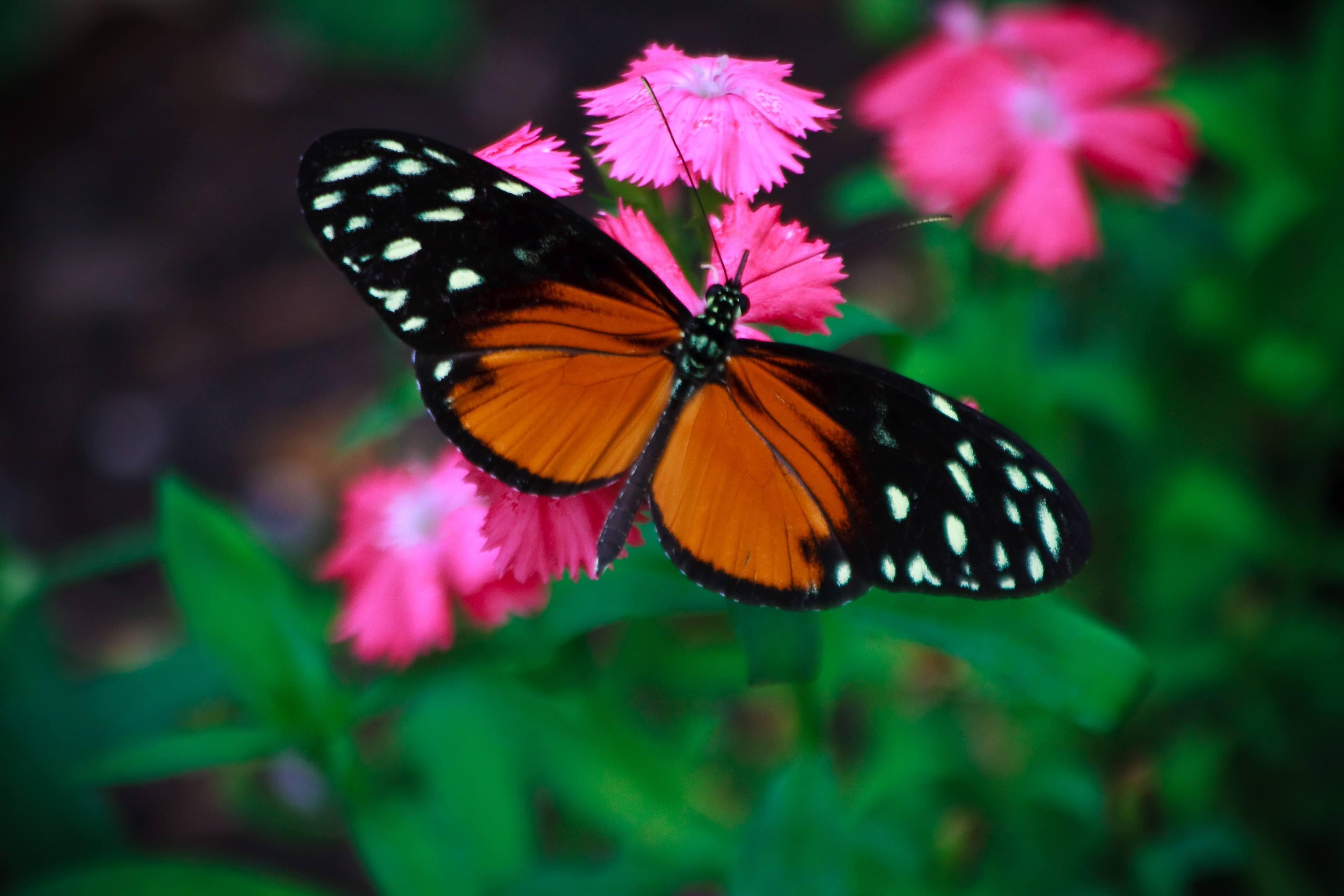 Flores y plantas para atraer mariposas 2