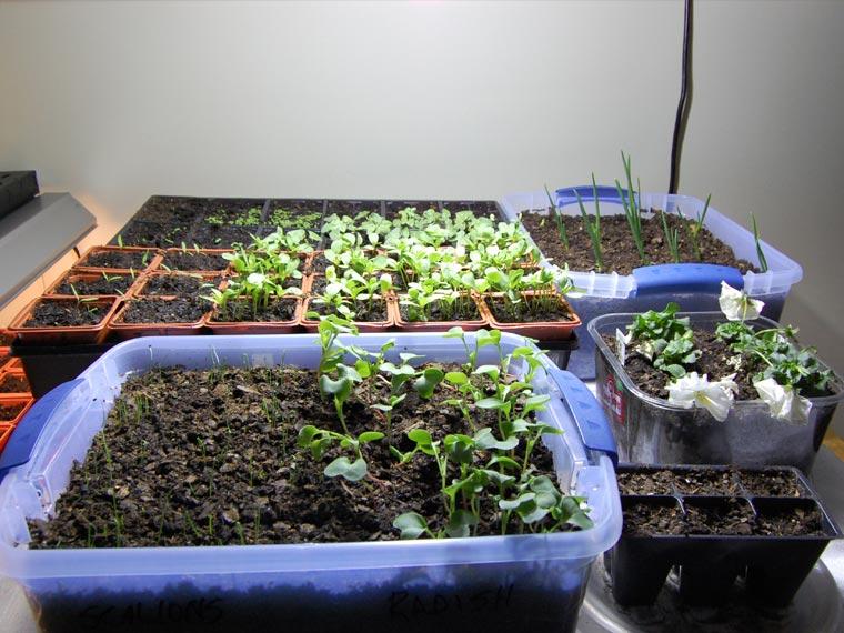 Regalos para papás jardineros 3