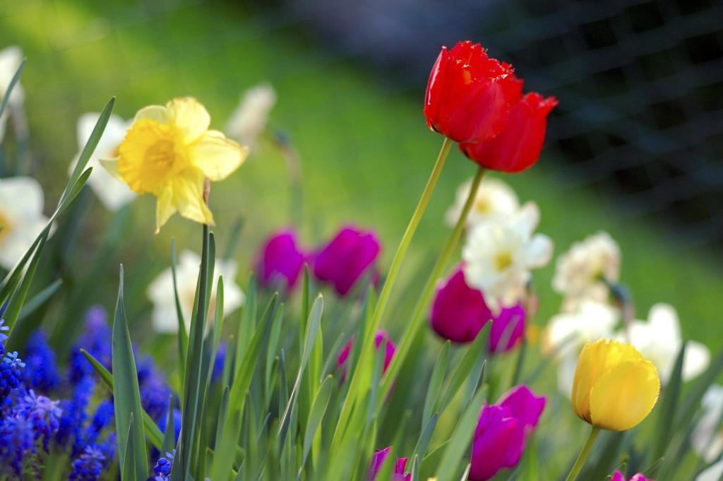 Tareas de jardinería en primavera 1