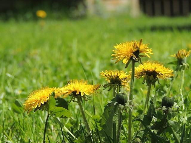Tareas de jardinería en primavera 2