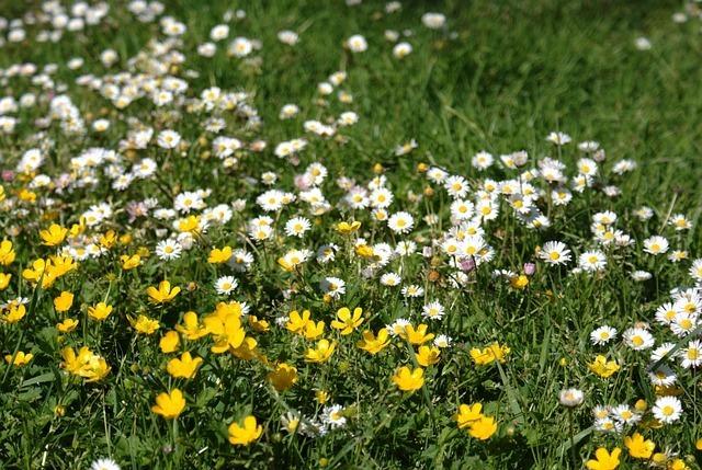 Tareas de jardinería en primavera 3