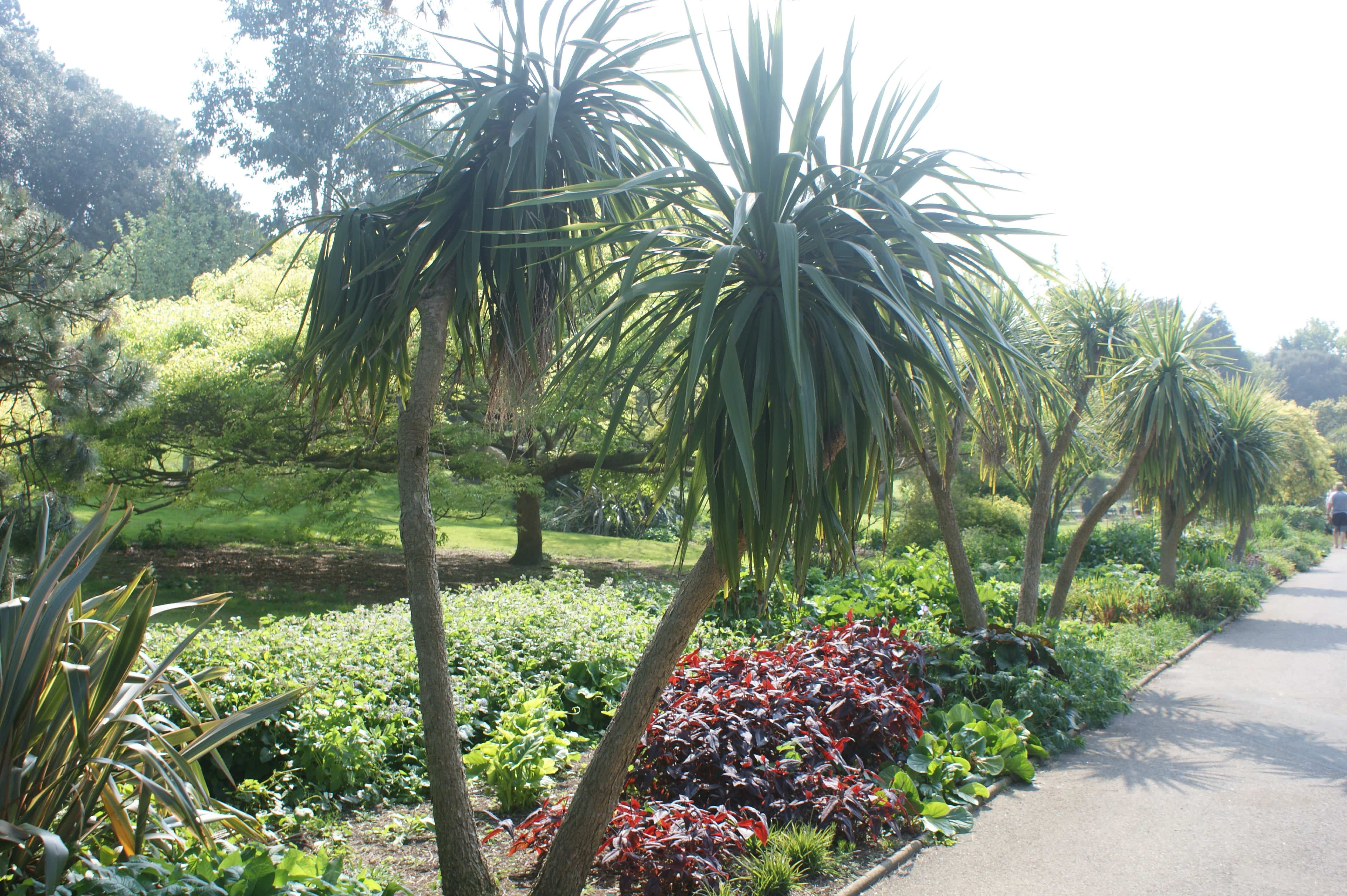 Tipos de palmeras 2