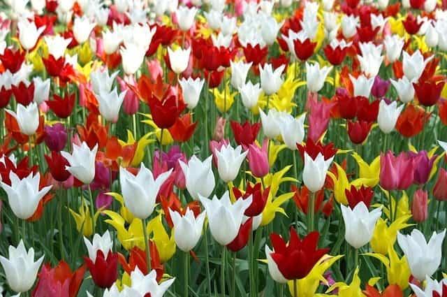 Flores para decorar en primavera 1