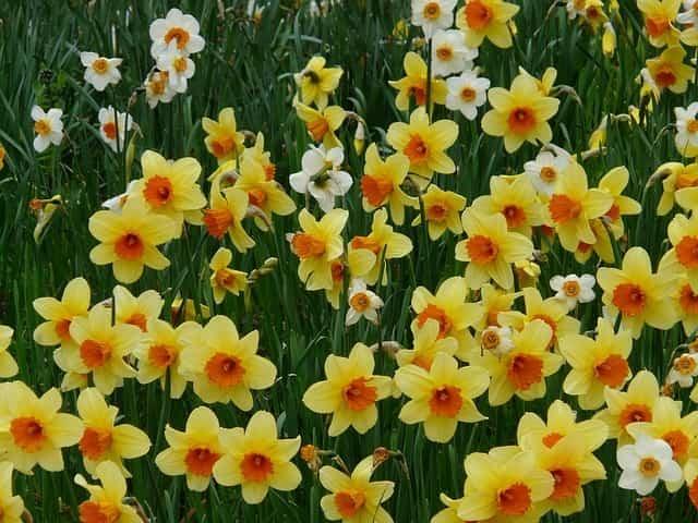 Flores para decorar en primavera 3