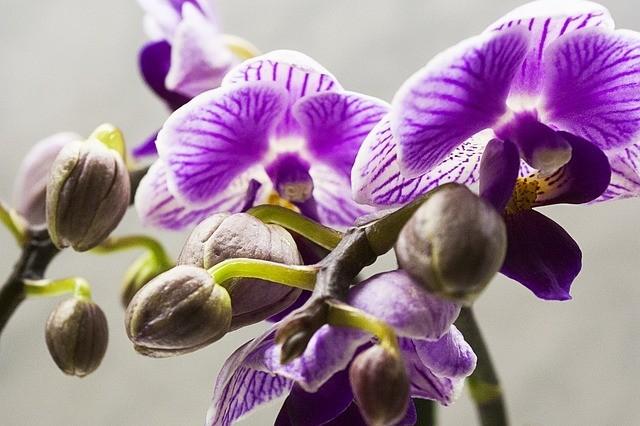 Especies de orquídeas 1