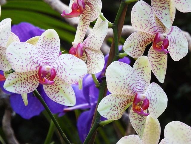 Especies de orquídeas 2