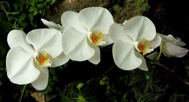 Especies de orquídeas 4