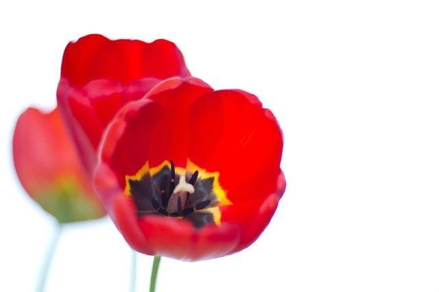 Flores para el Día de la Madre 3
