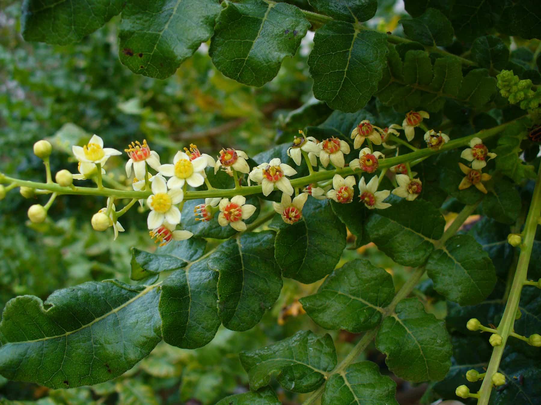 Flores silvestres 3