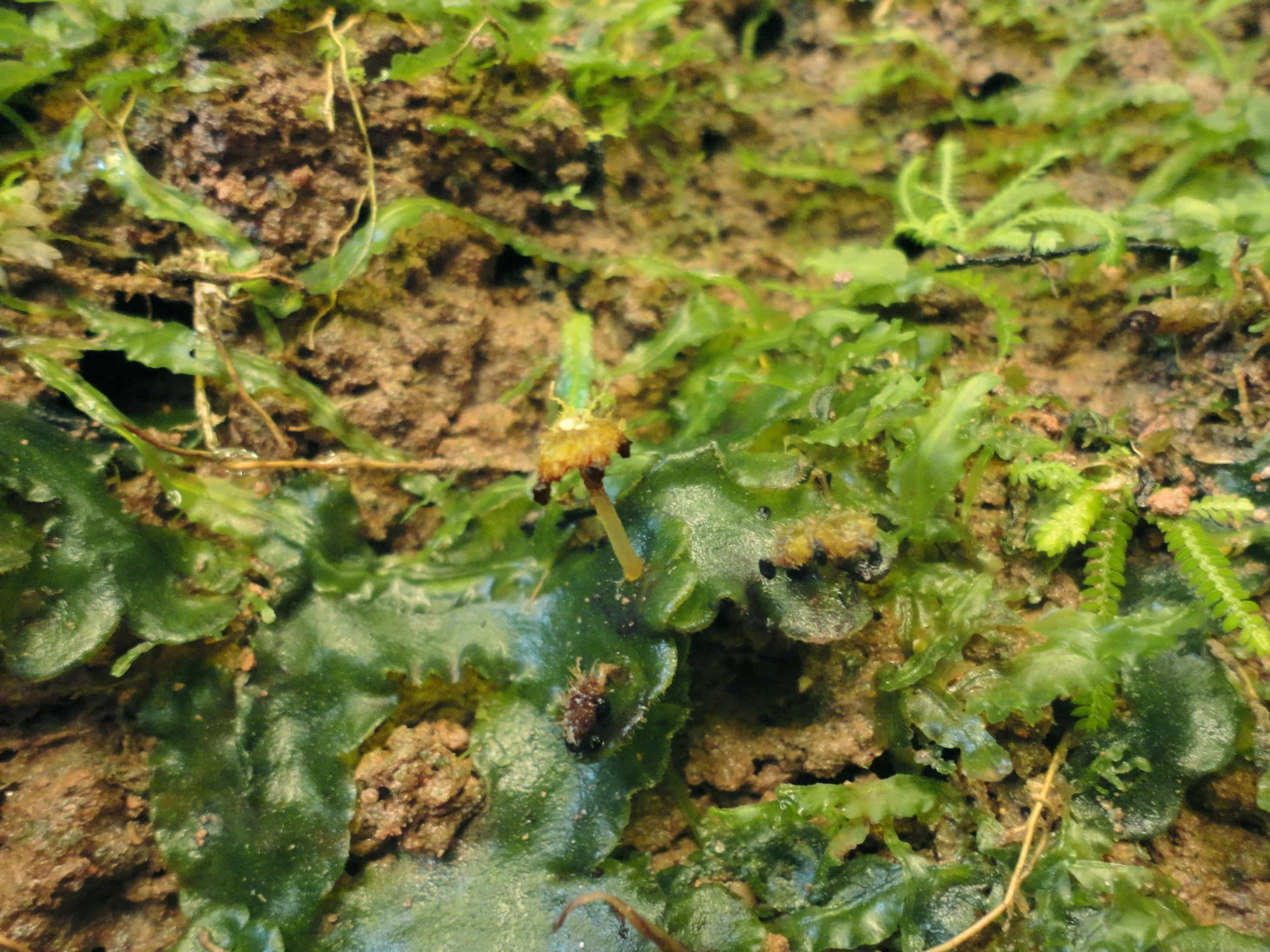 Las briofitas 2