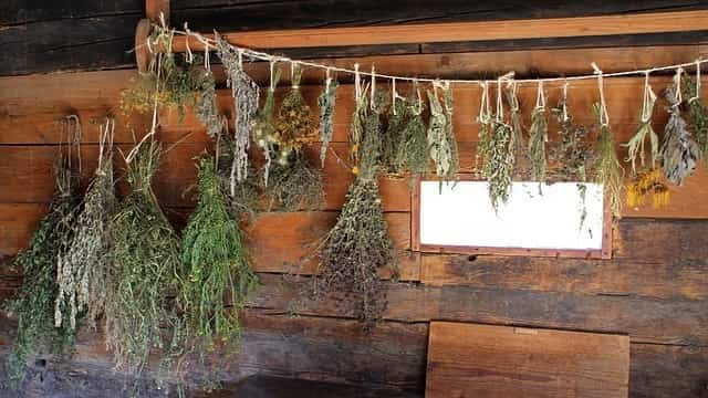 Medicamentos con plantas medicinales 1