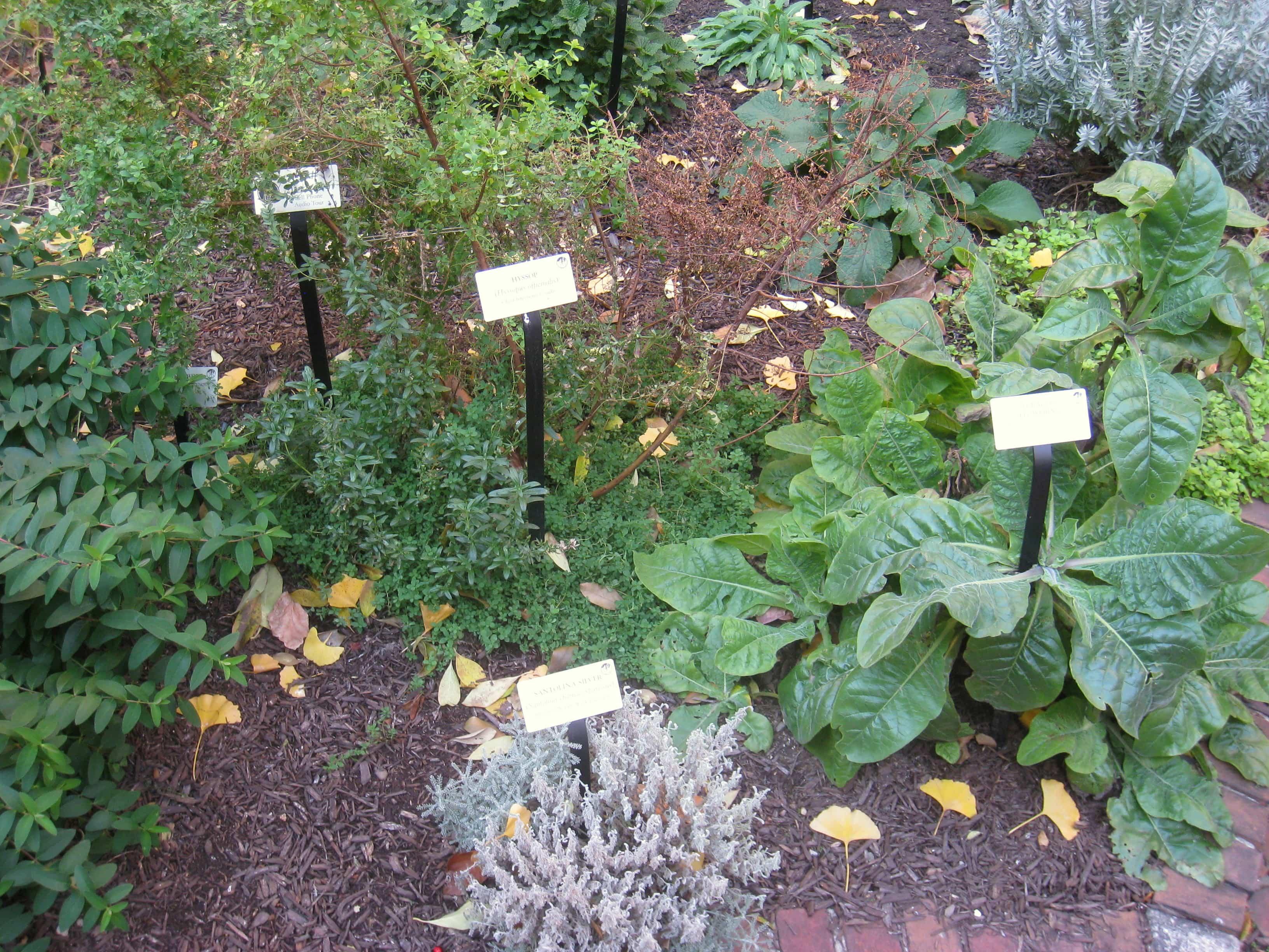 Medicamentos con plantas medicinales 3