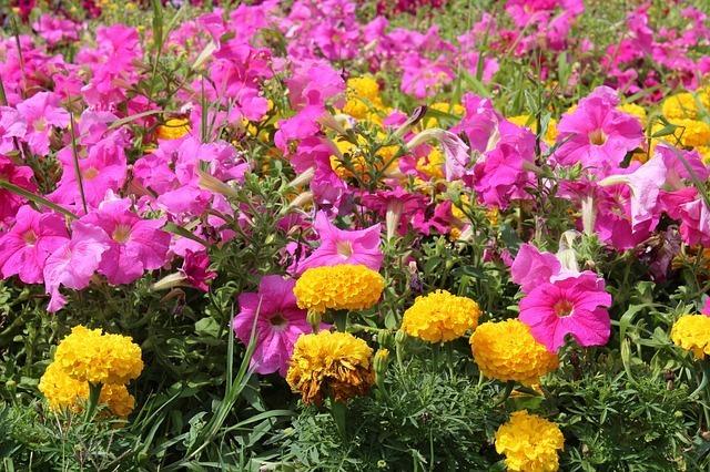 Plantas para tu jardín 2