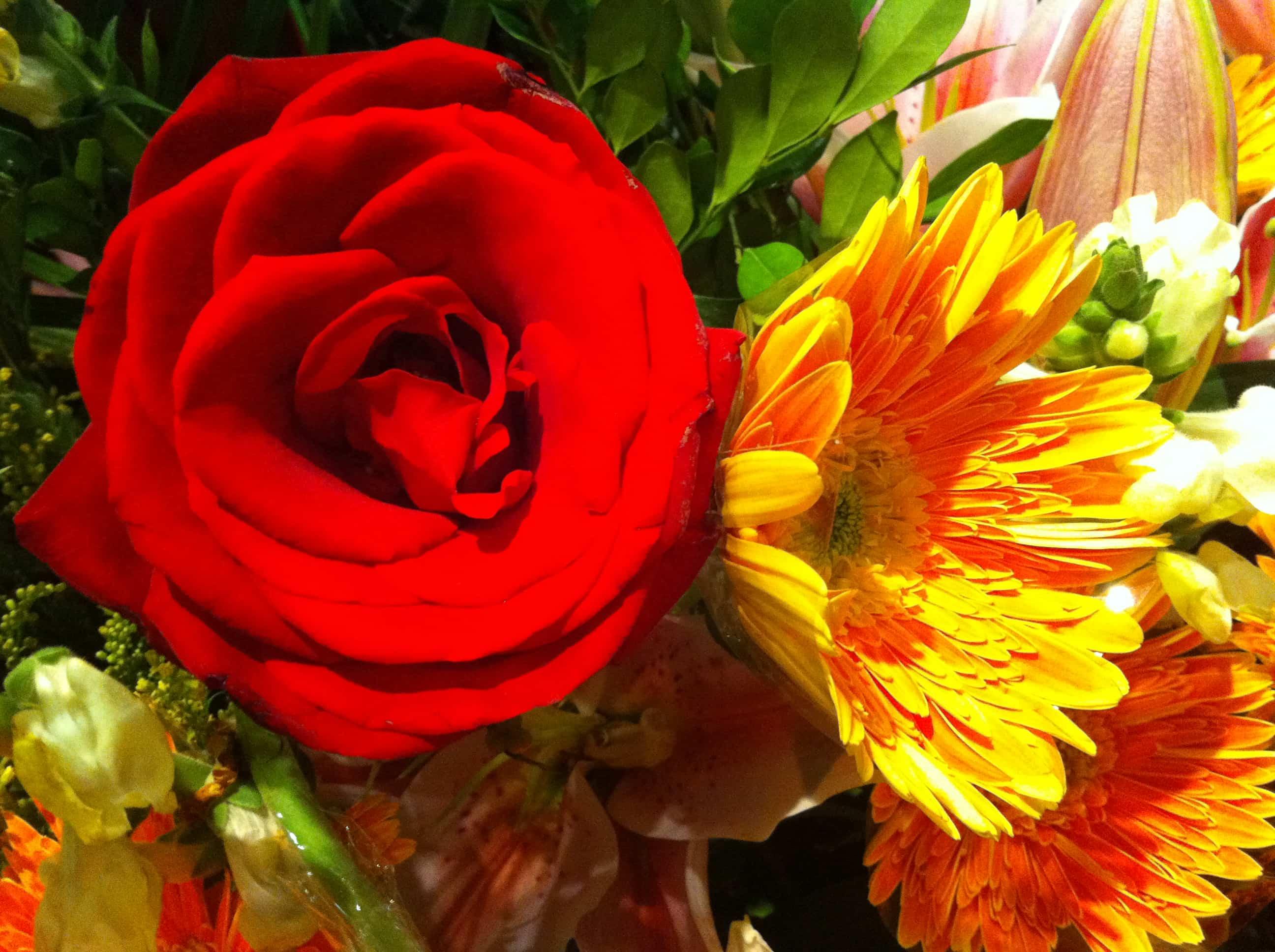 Tipos de rosas 4