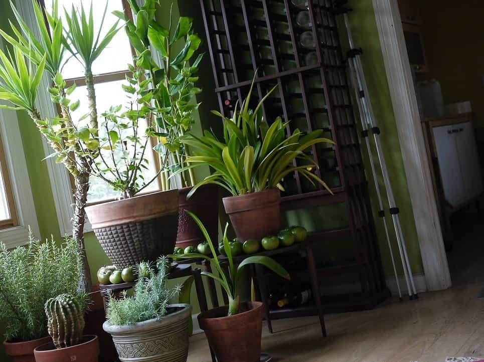 Cuidados de verano para las plantas de interior 3