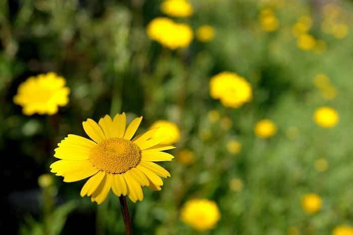 Flores y sus significados 3