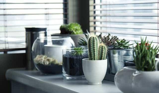 Plantas para la cocina 1